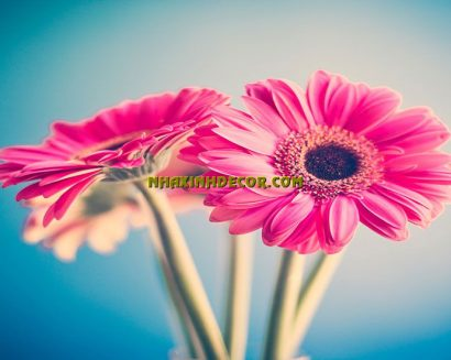 Tranh hoa F238