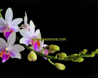 Tranh hoa F241