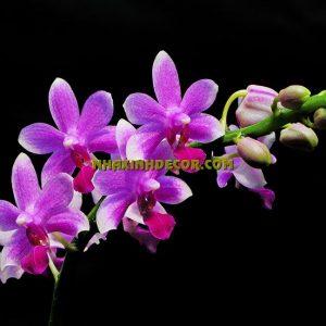 Tranh hoa F242