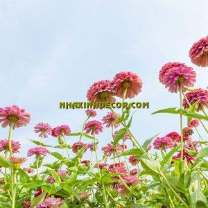 Tranh hoa F248