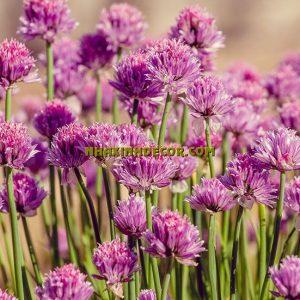 Tranh hoa F258