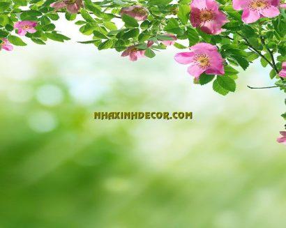 Tranh hoa F260