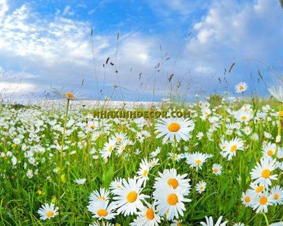 Tranh hoa F264