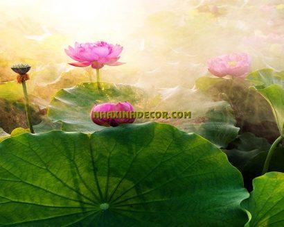 Tranh hoa F266