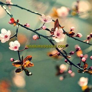 Tranh hoa F273