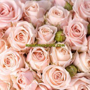 Tranh hoa F279