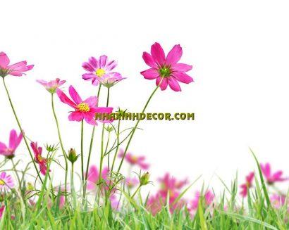 Tranh hoa F284