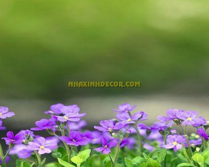 Tranh hoa F285