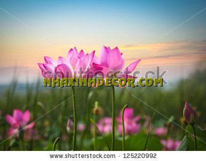 Tranh hoa F297
