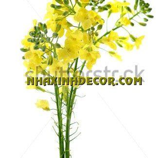 Tranh hoa F299