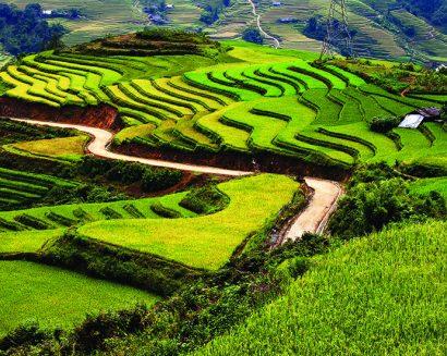 Tranh Phong Cảnh N45