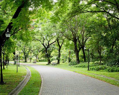 Tranh Phong Cảnh N478