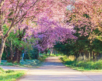 Tranh Phong Cảnh N491
