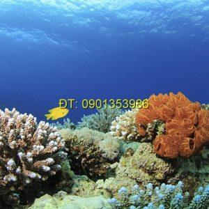 Tranh biển S120