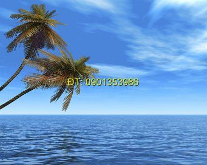 Tranh biển S16