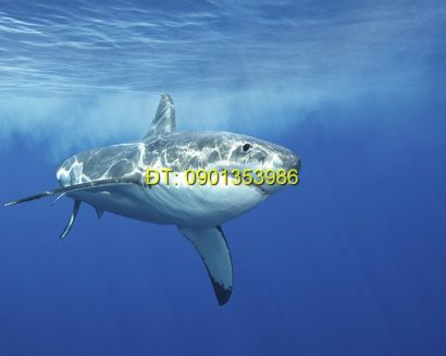 Tranh biển S195