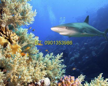 Tranh biển S202