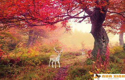 Tranh phong cảnh_056NT